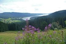 Schwarzwald Natur