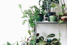 •••Plants