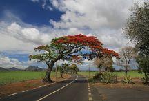 éhes utazó - Mauritius és Reunion / Mauritius és Reunion egy éhes utazó szemével