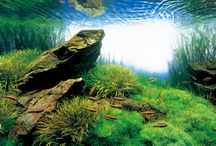 Tropical Fish / Tropical freshwater fish, fish tanks and natural underwater habitats