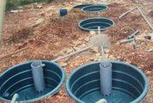 Phyto-épuration eau