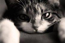 Cat love! <3 / Addicted!