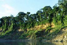Parque Nacional del Manu / Ubicado en las provincias de Paucartambo y Manu, es una de las áreas naturales protegidas más reconocidas del mundo. ¿Te gustaría conocerlo?