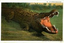 Alligators & Crocodiles / by Al Martinez