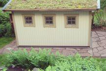 Green roof / Green roof - sedum plants