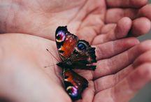 Butterflies / by Kody Sparks