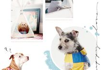 Webdesign | Animal & Pets / Webdesign | Animal & Pets. Picked works from personal portfolio and other creative boards.