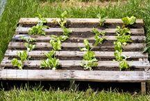 gardening ideas / Gadgets, ideas and diy for the garden