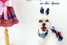 강아지 패션부띠끄