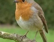 Allemaal vogeltjes