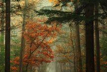 orman resimleri