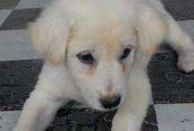 Bali's Dog