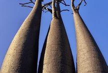 05 「木の造形」