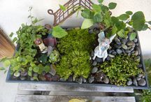 Fairy Gardens / These are Fairy Gardens made by Ana Stokley