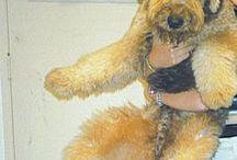 Fox-terrier / È la mia tenerezza io ho il mio tex è e il mio tesoro
