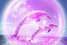 Pretty:  Dolphins