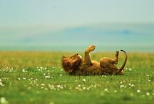 animal lovin' / by Jeri Alfano
