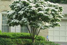 Yard Trees