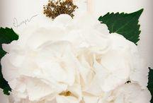 Ilustração com flores