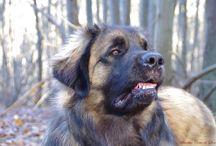 La vie à travers un appareil photo / Des photos de mes chiens, de ceux de la famille ou des amis, de rencontres, de la nature...