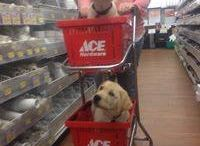 Pets who shop at Goffstown Hardware