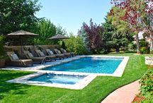 Swimming Pool/Backyard