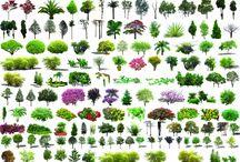 plant_psd