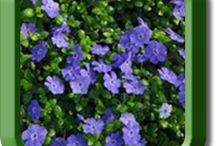 All Terrain Ground Cover / All Terrain Ground Covers will tackle, tame and transform your landscape!