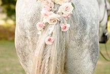 Equestrian wedding ideas / How horses can be incorporated into any wedding for the horse lovers and normal people ;)