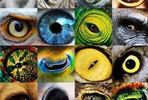 Yeux / by Sabine