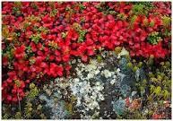 native / native New England vegetation / by Russ Tyson