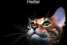 wetter app cat