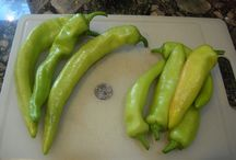 My Pepper Plants / by PEPPERMEISTER!