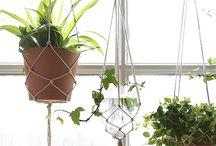 Hangplanten / Hangende planten zijn goede sfeermakers en praktisch om een kleinere ruimte te vergroenen.