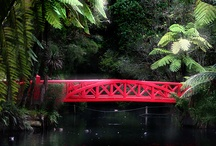 New Zealand / Pukekura Park