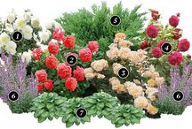 сад цветы розы композиции