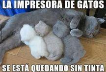 gatossss