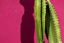 Groen roze. Paars