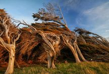 Slope point trees