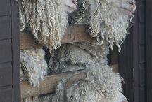 kozy owce
