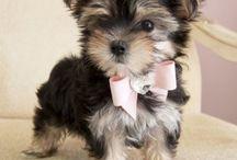 Too Darn Cute!