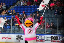 Penguins vs. Americans - February 1, 2014 / Pink in the Rink night in Wilkes-Barre