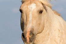 ♥ Horses / by Carole Skewes