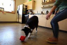 Juguete Dispensador de Alimento y Premios para Perros / 0