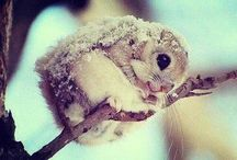 Cute Animals *-*