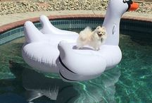 *| Floating Cuties |* / This is pictures from social media with Animals that showcase that they in fact float just like us! #Floatiekings #FloatLife #Float #PoolFloat #SwanFloat #PizzaFloat #Flotadores #Cat #Dog #Pet