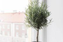 hiroba.植物