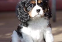 Puppies / Søte hunder og valper