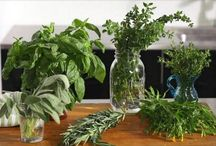 Hierbas y verduras