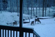 Snow Days in WV / Viewer submitted photos of a winter wonderland.